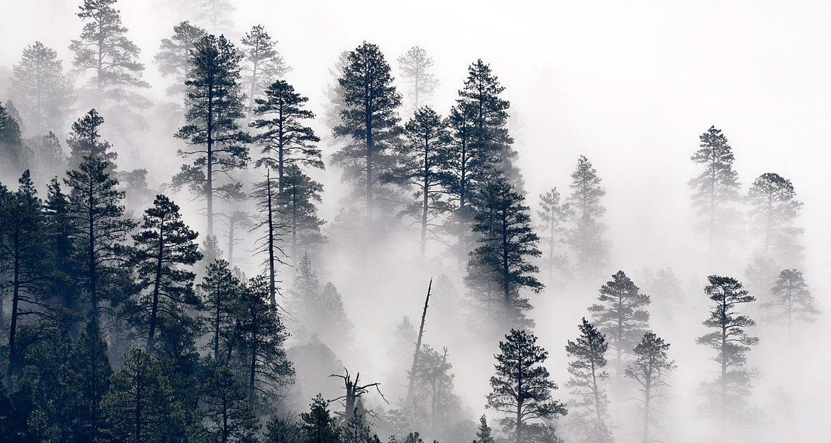 La Última Niebla