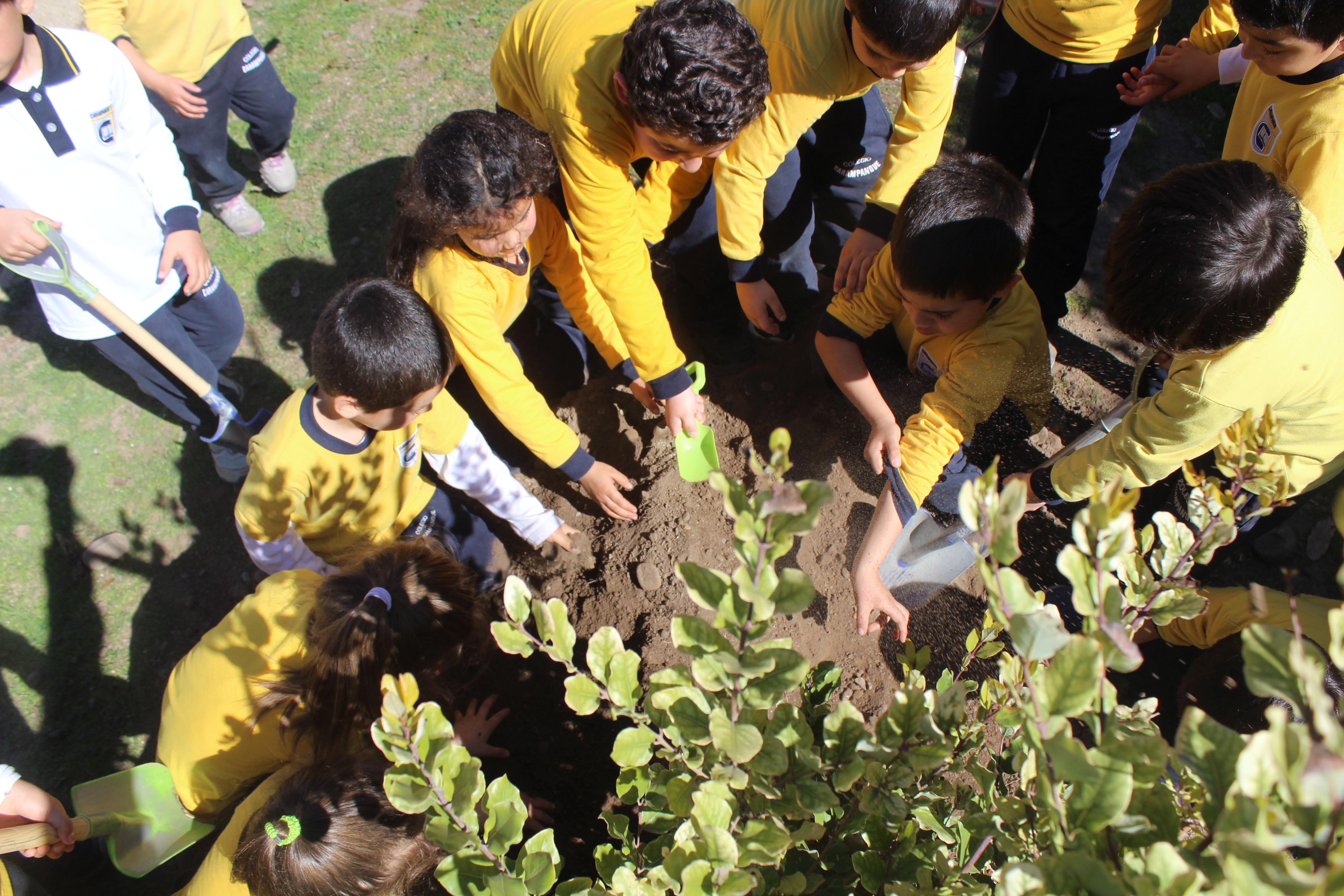 Campaña de Forestación